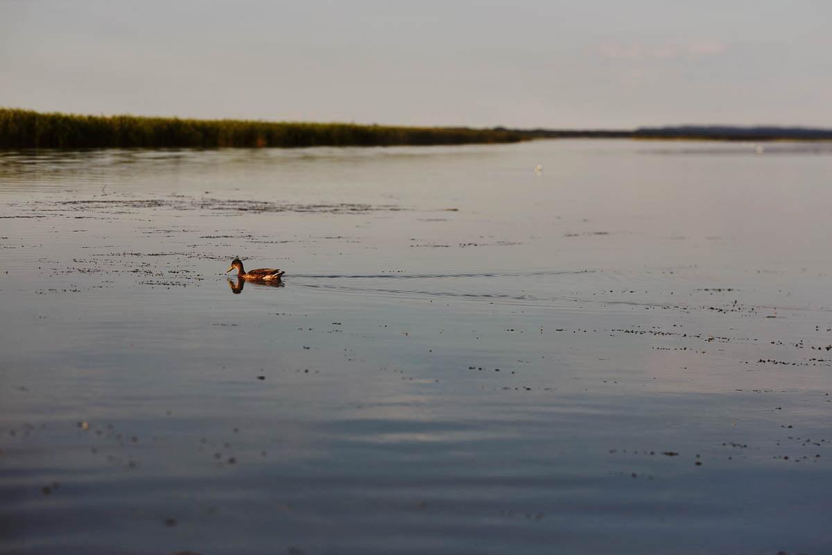 Karsibów - zalew kaczuszka