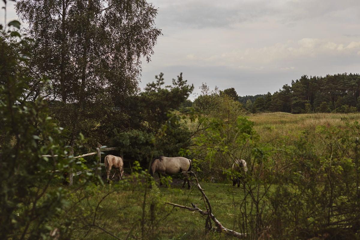dworek ostęp - konie na pastwisku