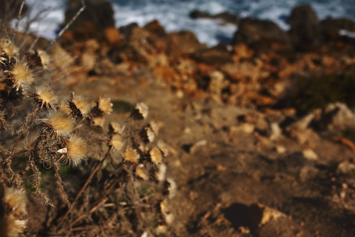 zdjecia ślubne malta - Ramla Bay - roślinność