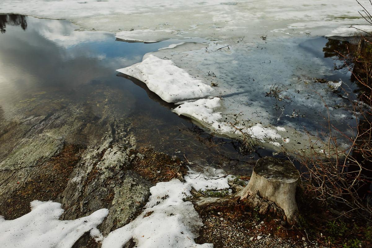 kra na jeziorze w Norwegii