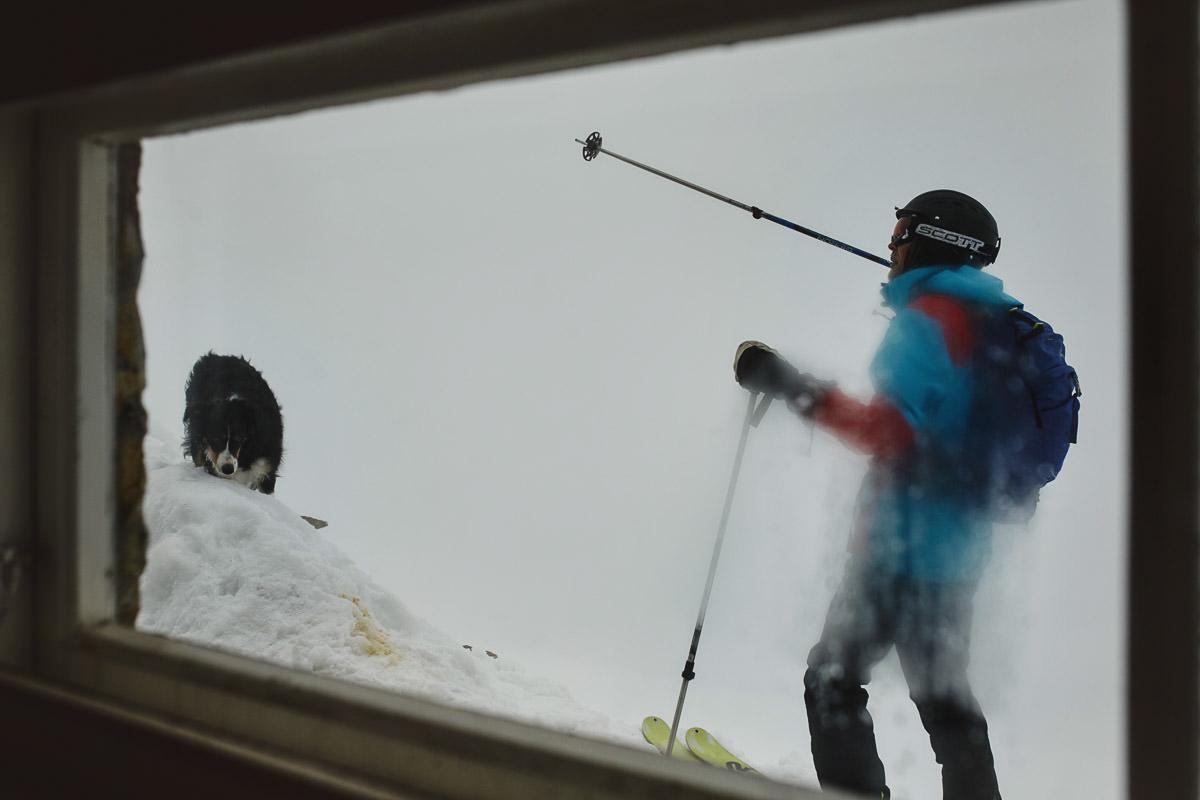 narciarze i pies