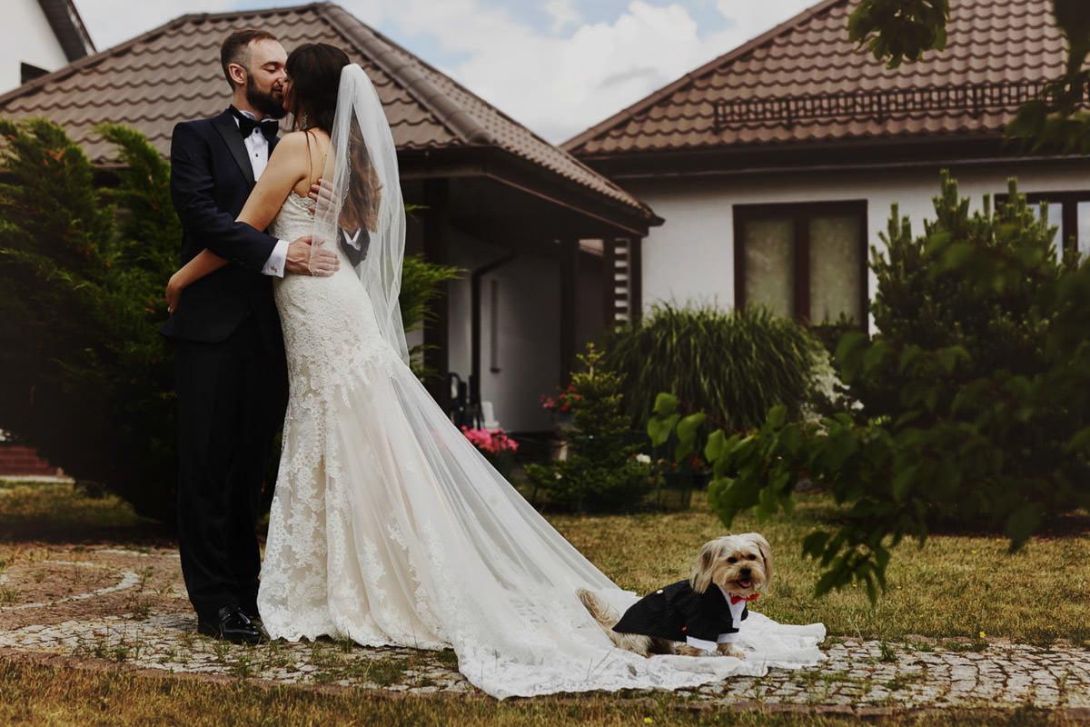 suknia ślubna i pies