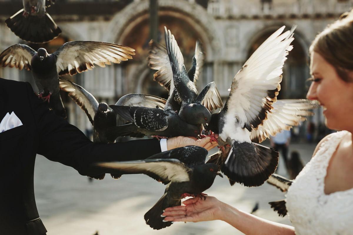 gołębie na placu Świetego Marka - Wenecja