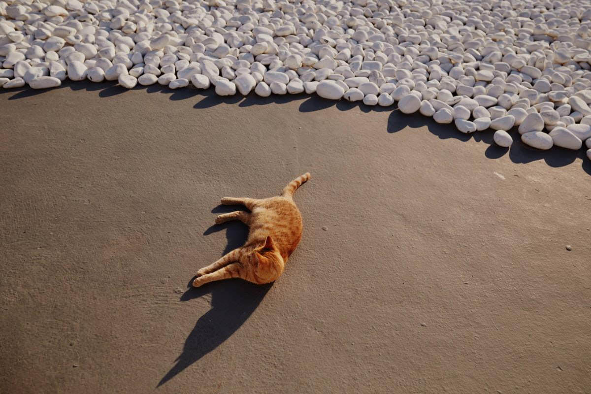 kot leżący na dachu
